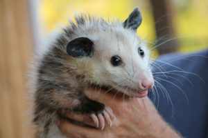 identity-dental-marketing-possum